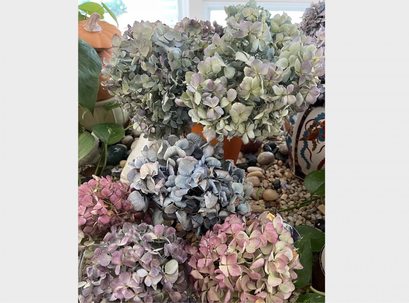 野花、家花、乐高花、苹果干、小龙_图1-16