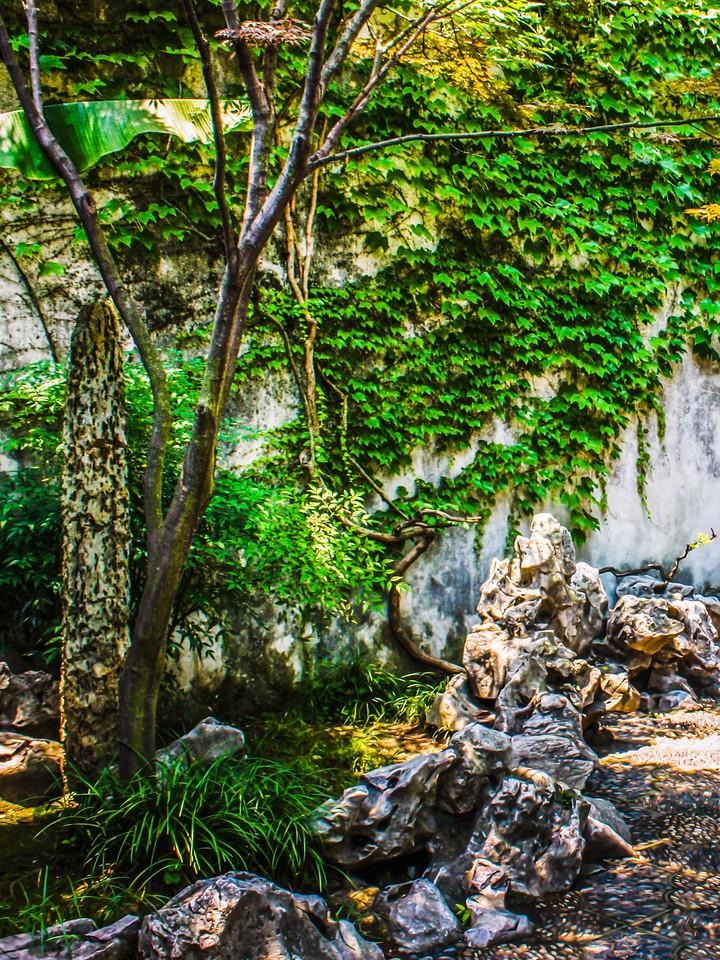 苏州藕园,庭院小景_图1-5