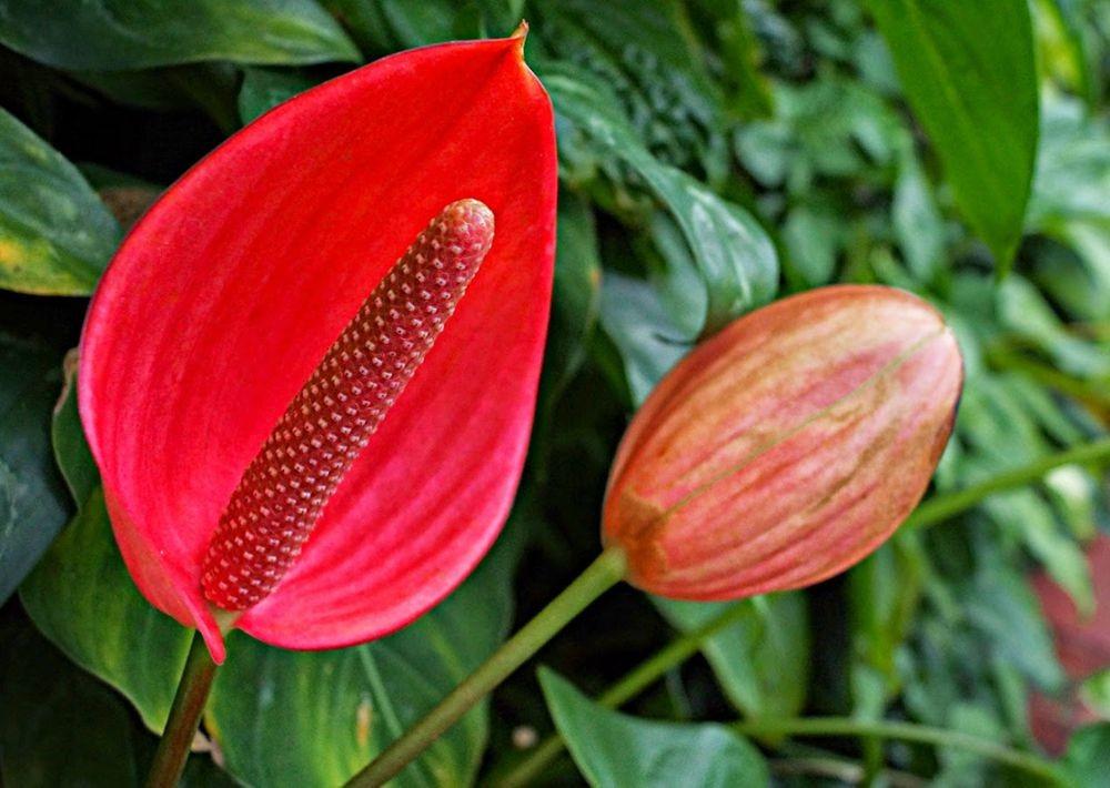 花卉日记--100_图1-1