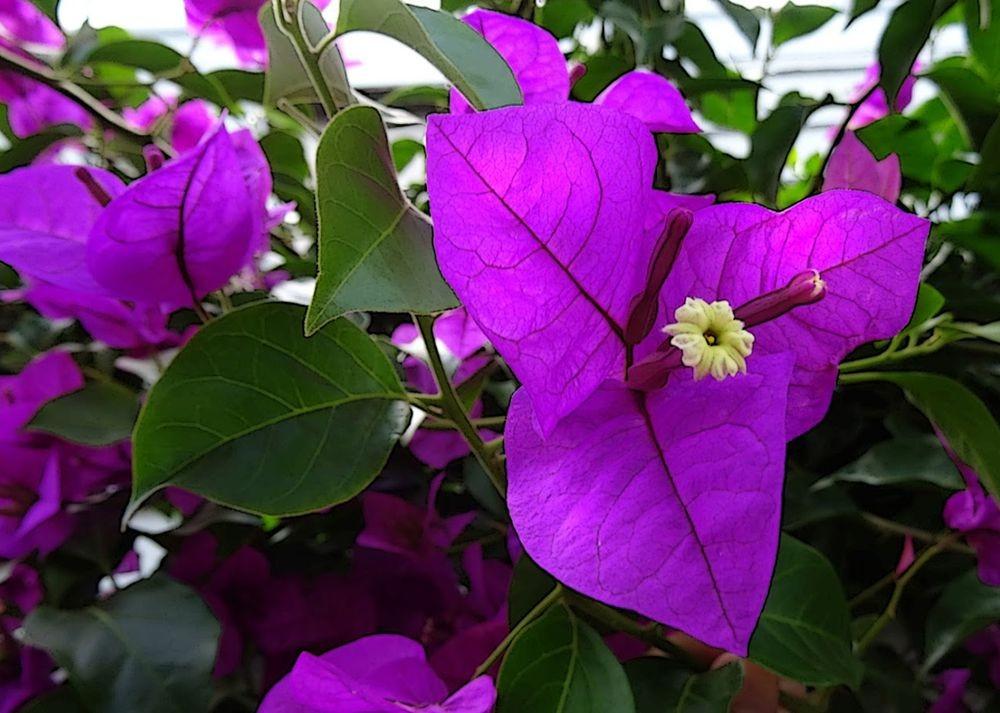 花卉日记--100_图1-2