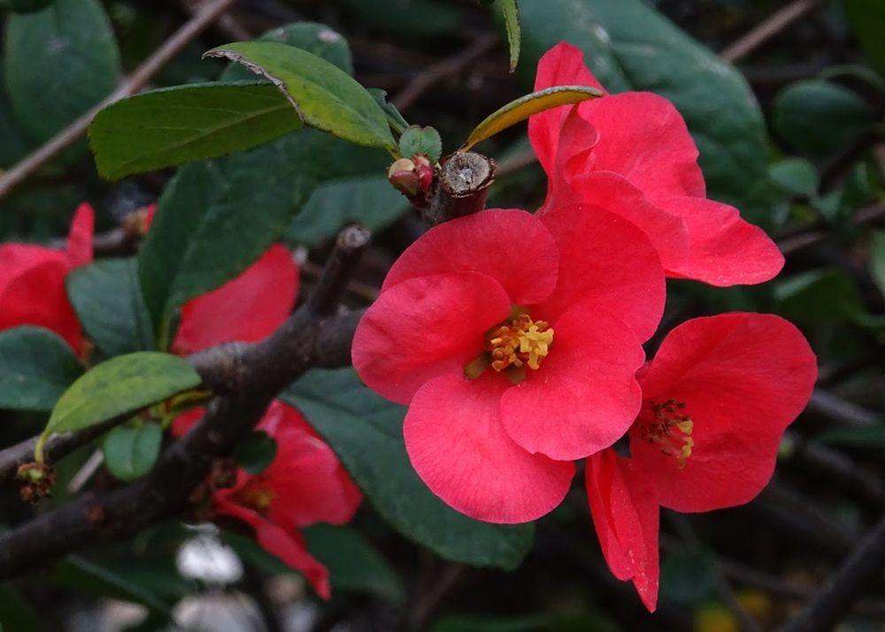 花卉日记--100_图1-4