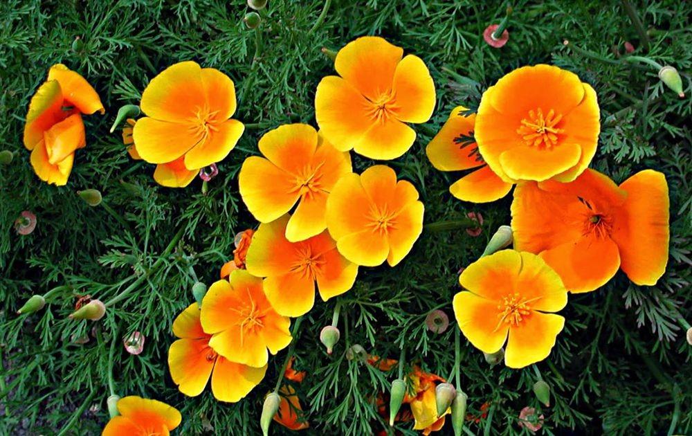花卉日记--100_图1-7