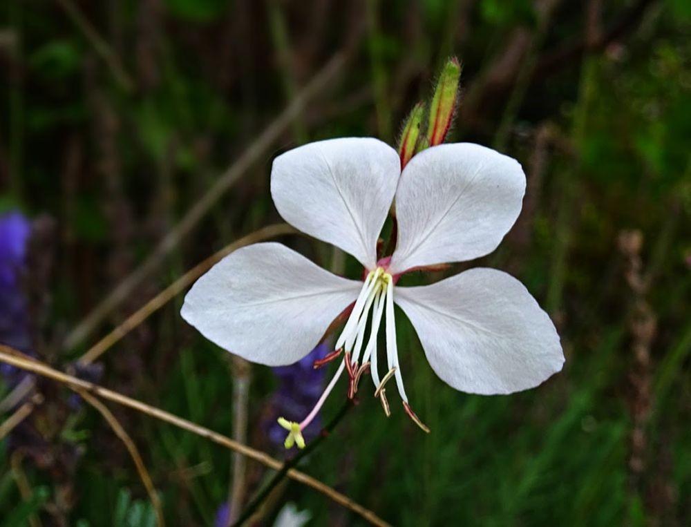 花卉日记--100_图1-9