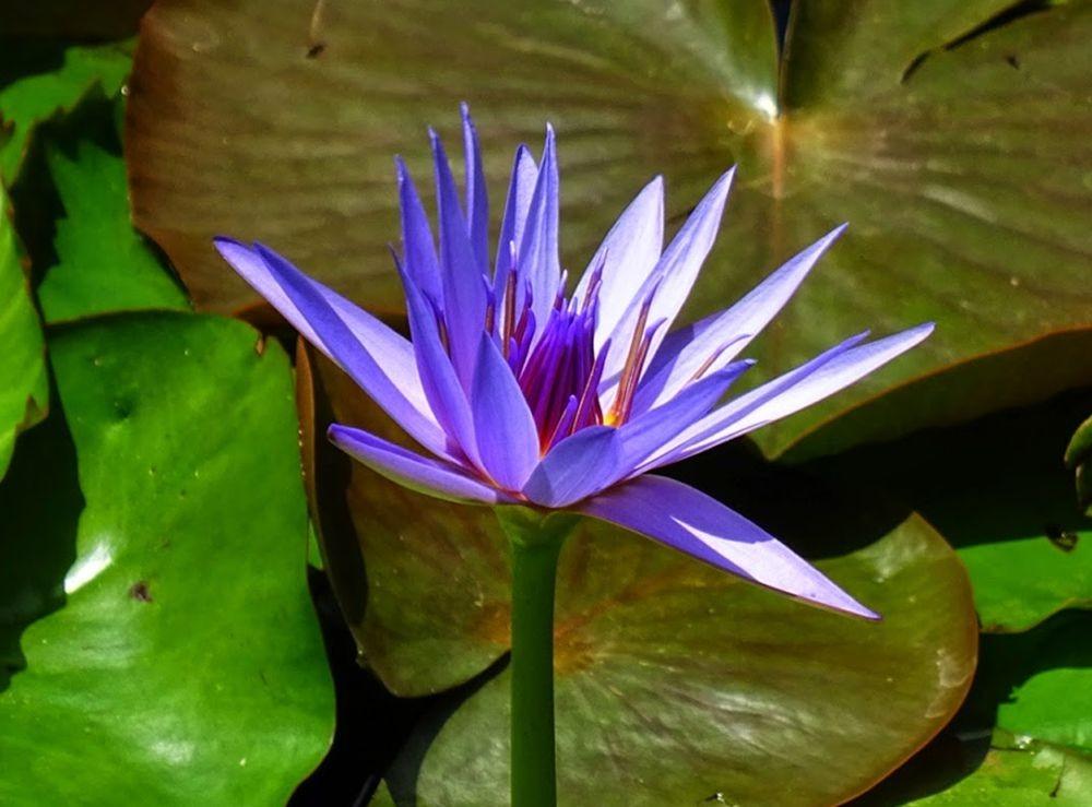 花卉日记--100_图1-10