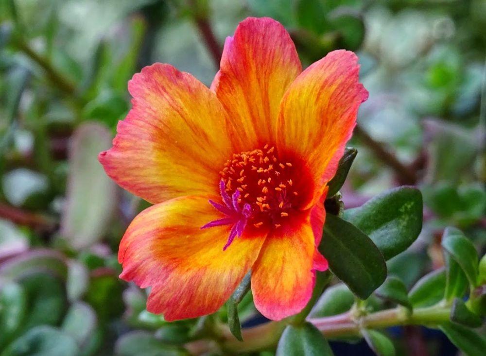 花卉日记--100_图1-12