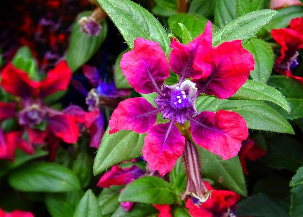 花卉日记--100_图1-17