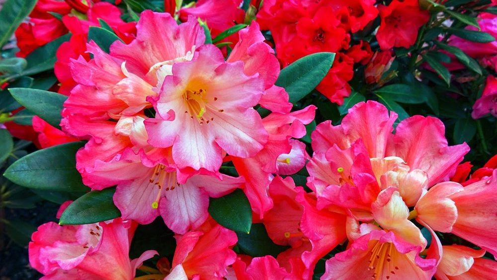 花卉日记--100_图1-20