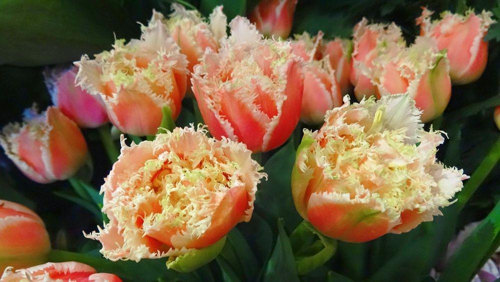 花卉日记-101_图1-1