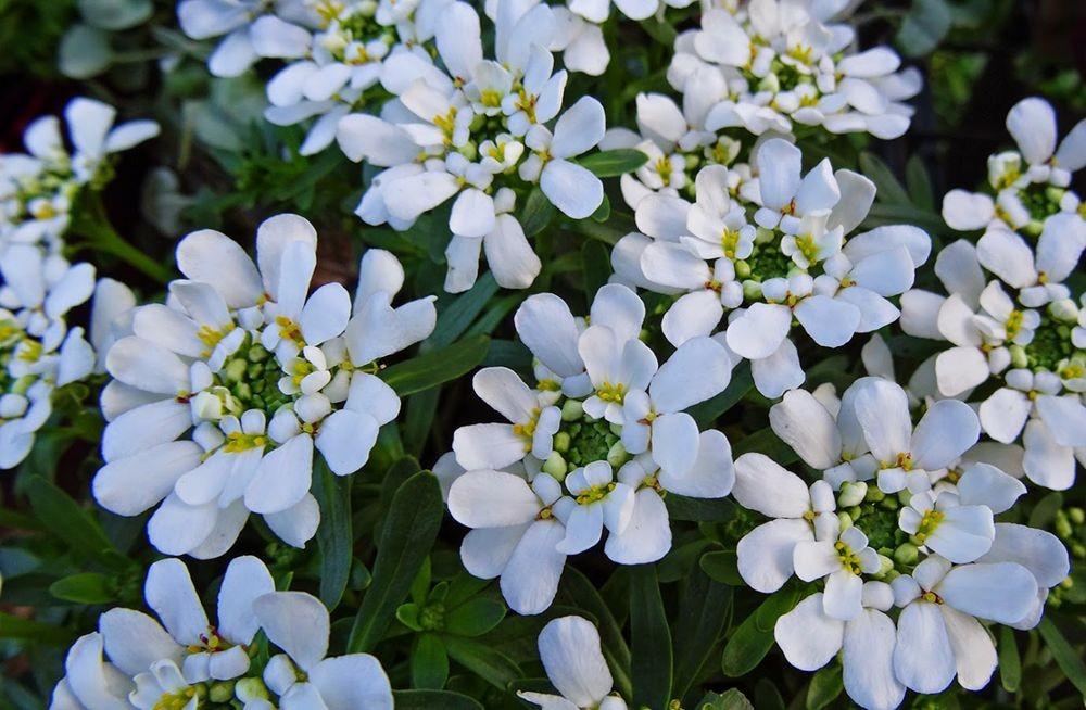 花卉日记-101_图1-2