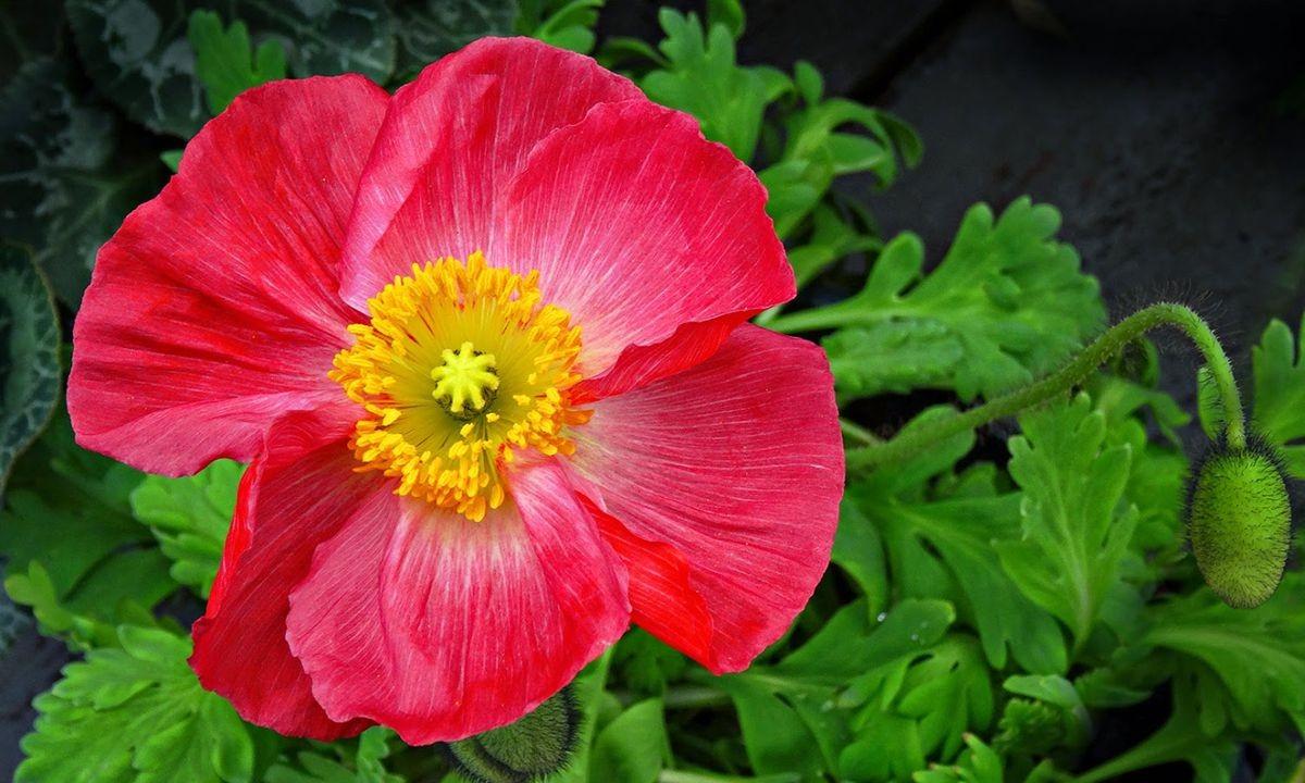 花卉日记-101_图1-4