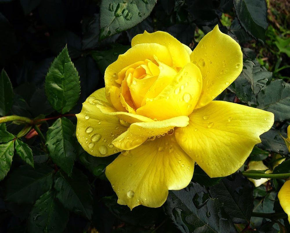 花卉日记-101_图1-6