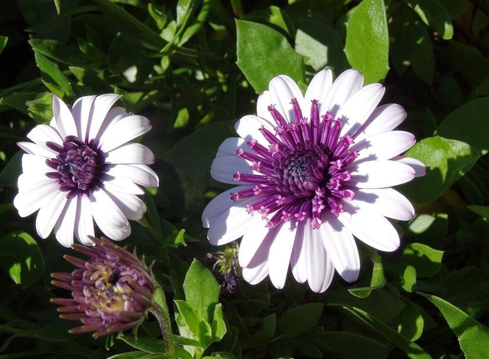 花卉日记-101_图1-7