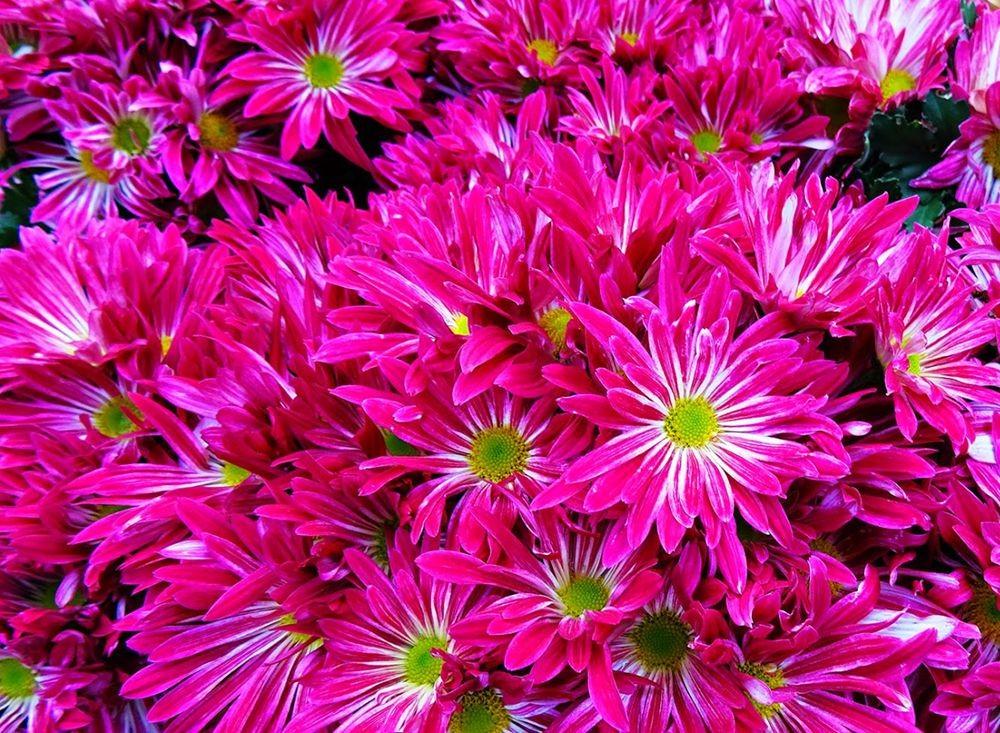 花卉日记-101_图1-9