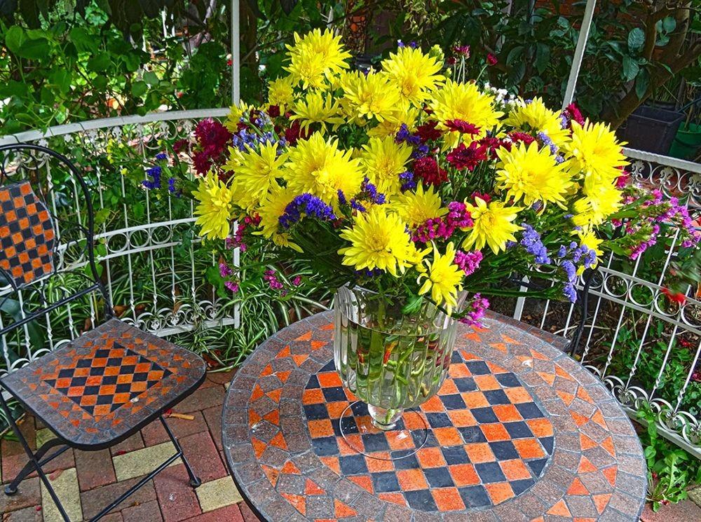 花卉日记-101_图1-10