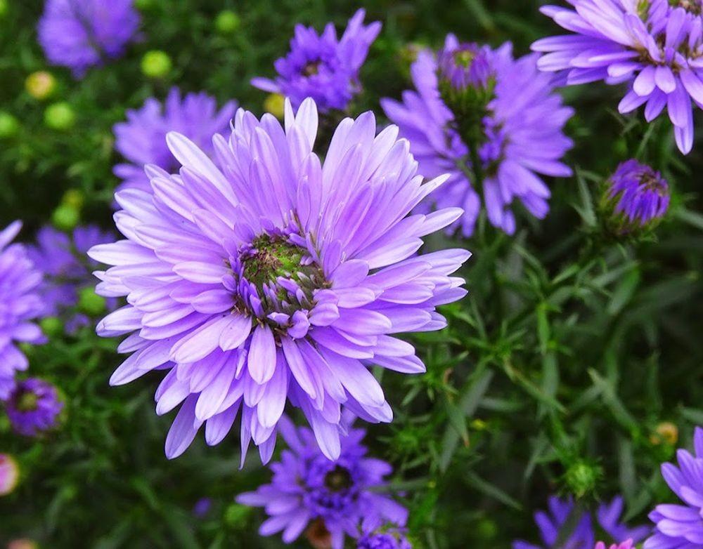 花卉日记-101_图1-12