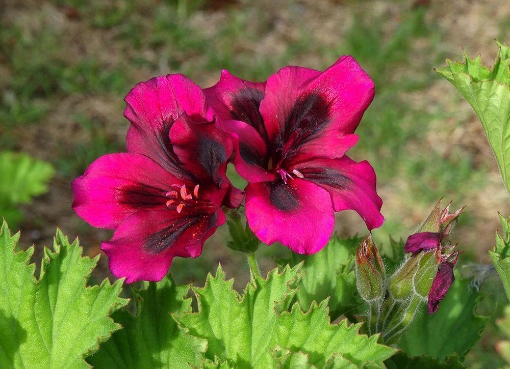 花卉日记-101_图1-13
