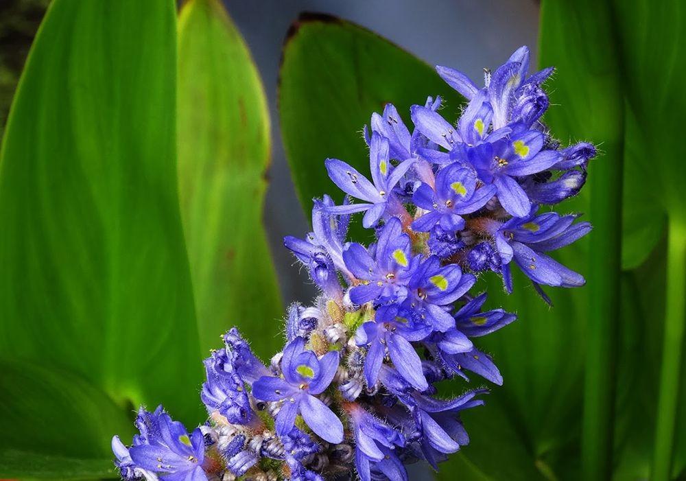 花卉日记-101_图1-16