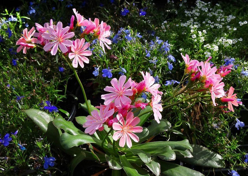 花卉日记-101_图1-17
