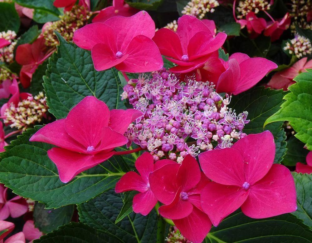 花卉日记-101_图1-18