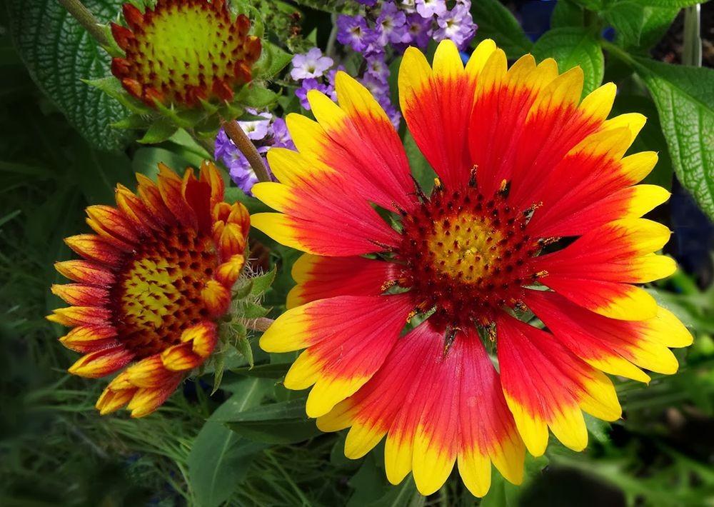 花卉日记-101_图1-19