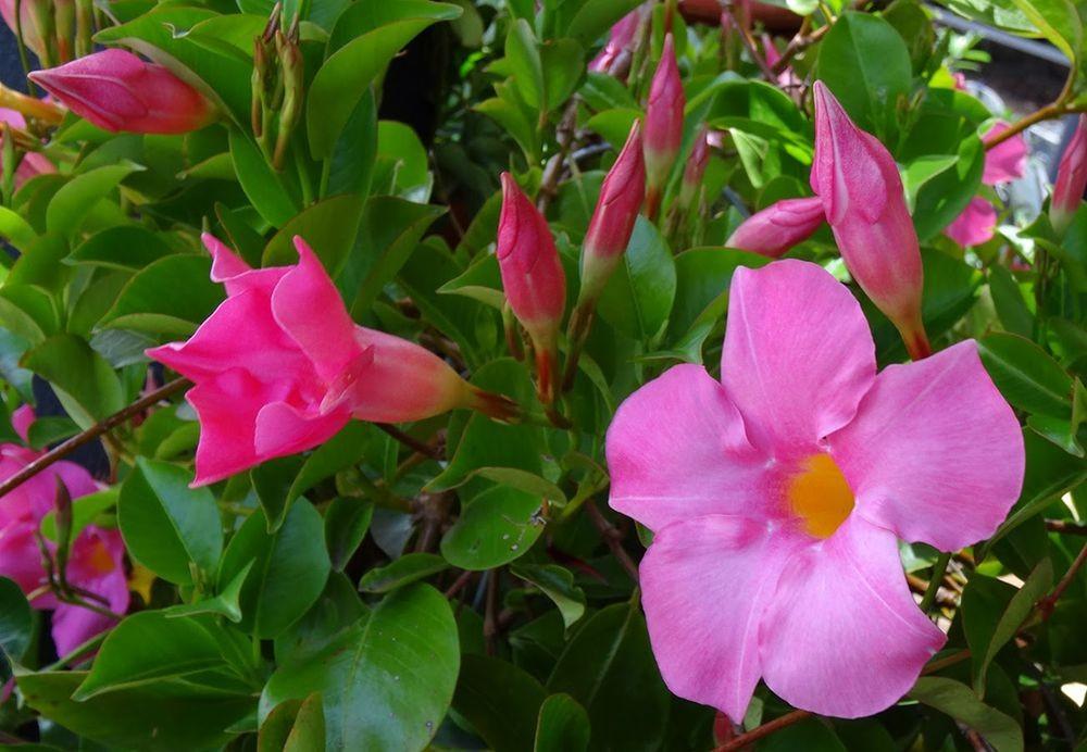 花卉日记-101_图1-20