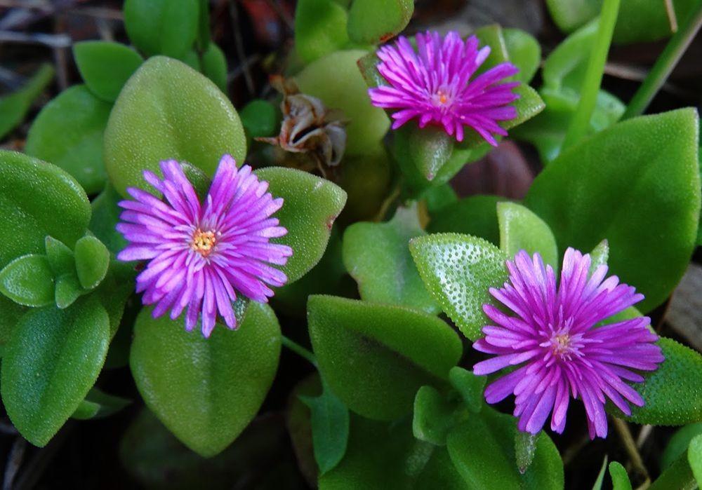 花卉日记-101_图1-22