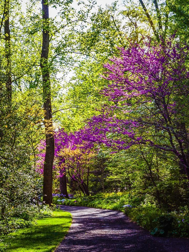 Chanticleer花园,幽静的树林_图1-2