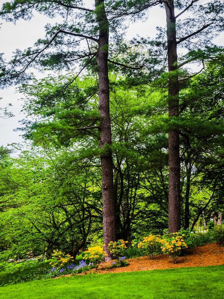 Chanticleer花园,幽静的树林_图1-1