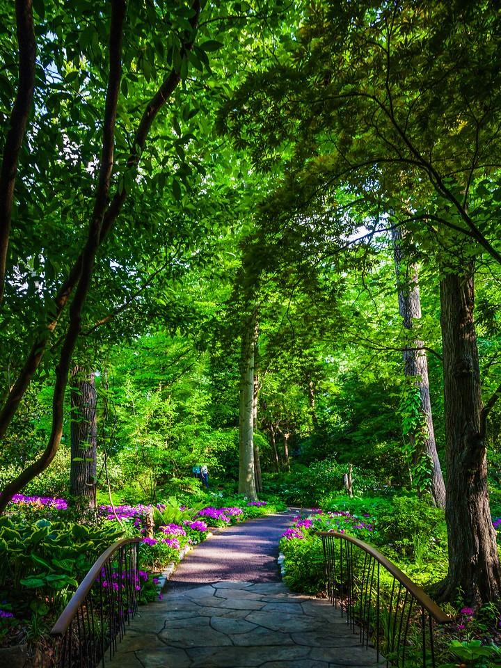 Chanticleer花园,幽静的树林_图1-3