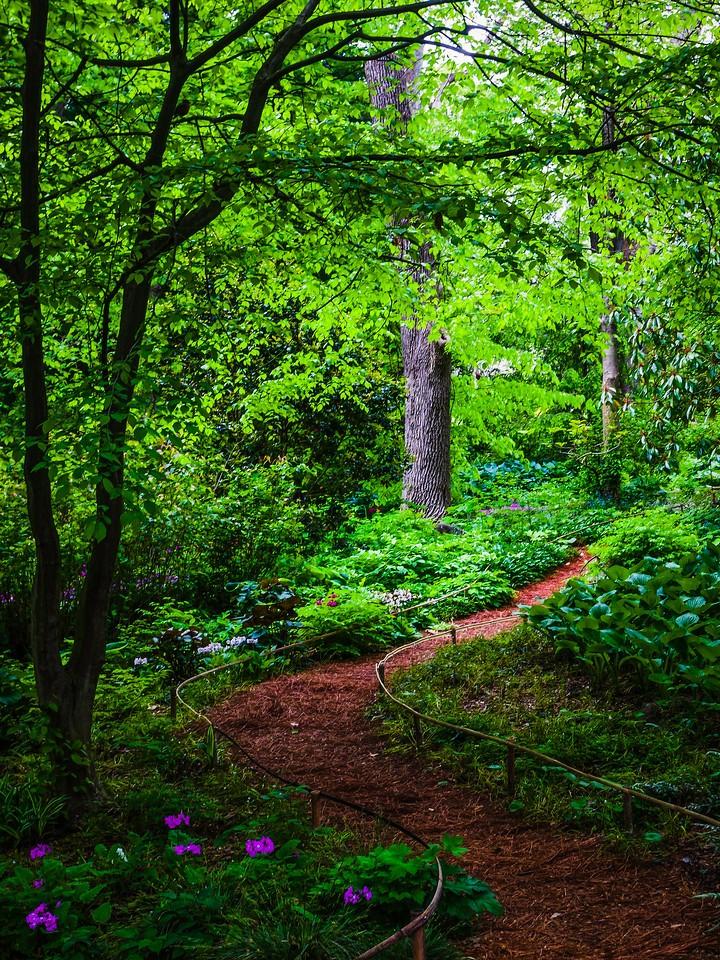 Chanticleer花园,幽静的树林_图1-9