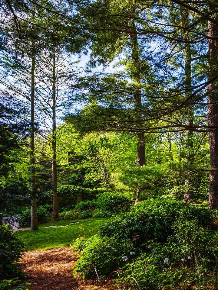 Chanticleer花园,幽静的树林_图1-5