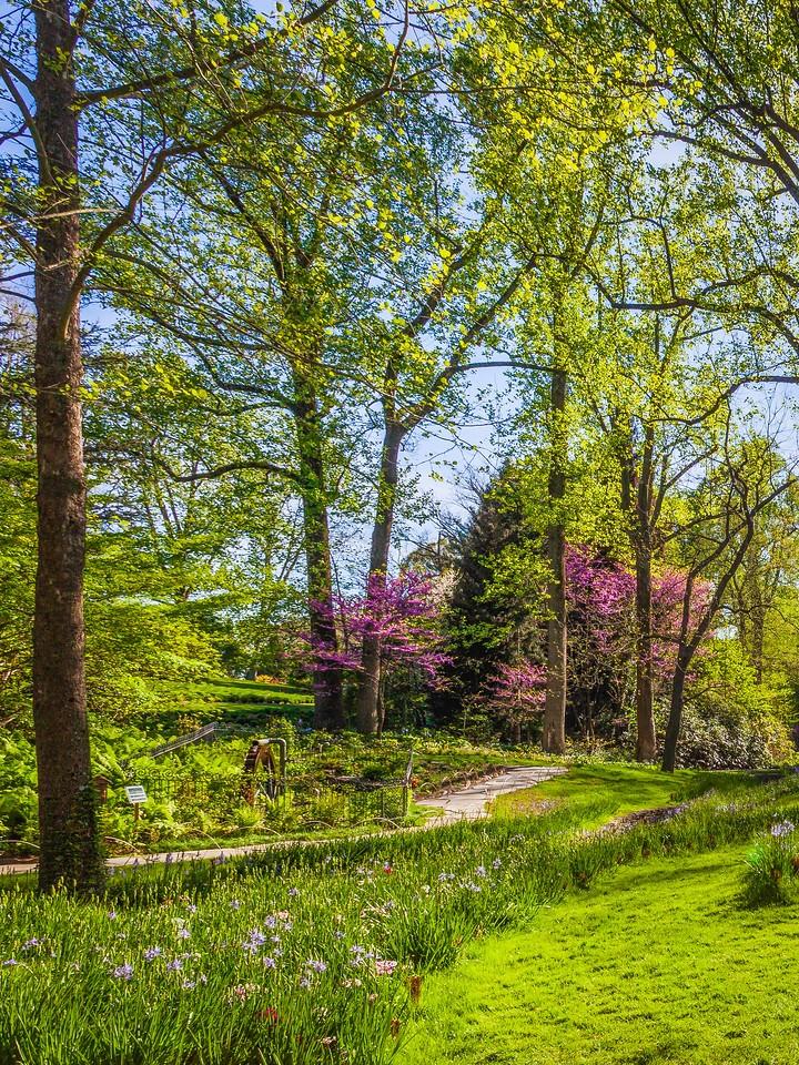 Chanticleer花园,幽静的树林_图1-6
