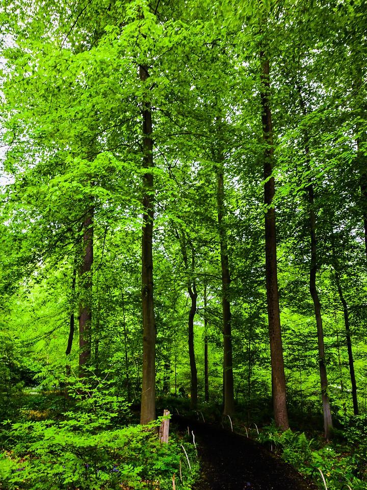 Chanticleer花园,幽静的树林_图1-4