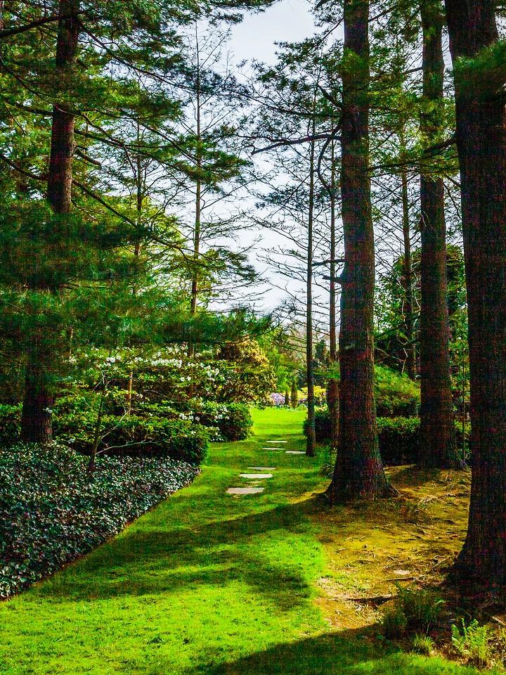 Chanticleer花园,幽静的树林_图1-8