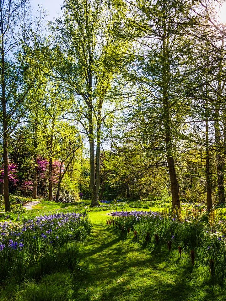 Chanticleer花园,幽静的树林_图1-10