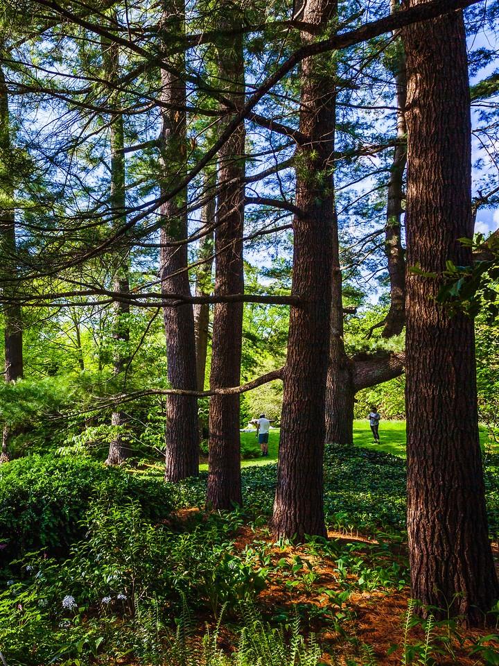 Chanticleer花园,幽静的树林_图1-11