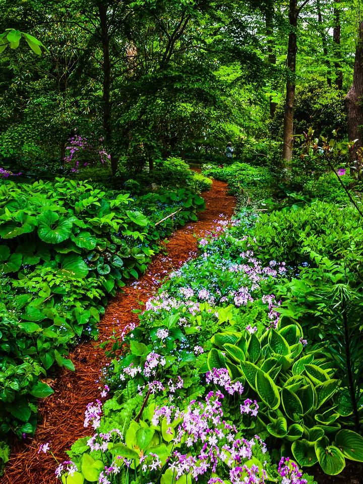 Chanticleer花园,幽静的树林_图1-12