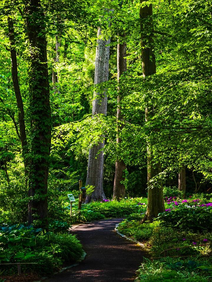 Chanticleer花园,幽静的树林_图1-16