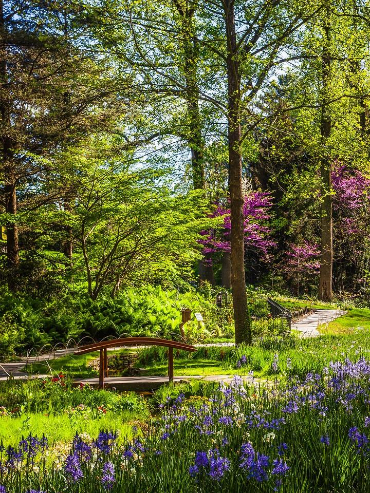 Chanticleer花园,幽静的树林_图1-15