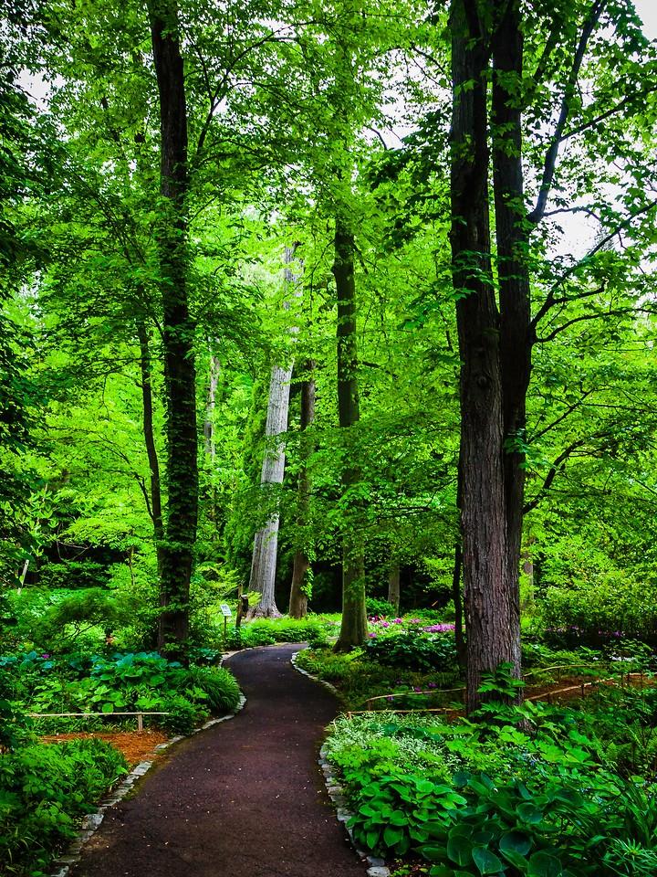 Chanticleer花园,幽静的树林_图1-14