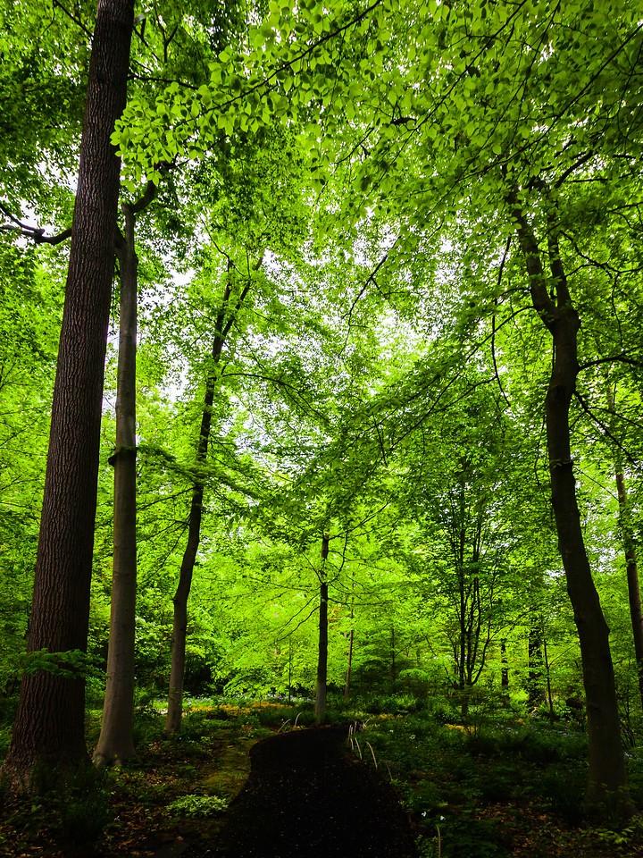 Chanticleer花园,幽静的树林_图1-17