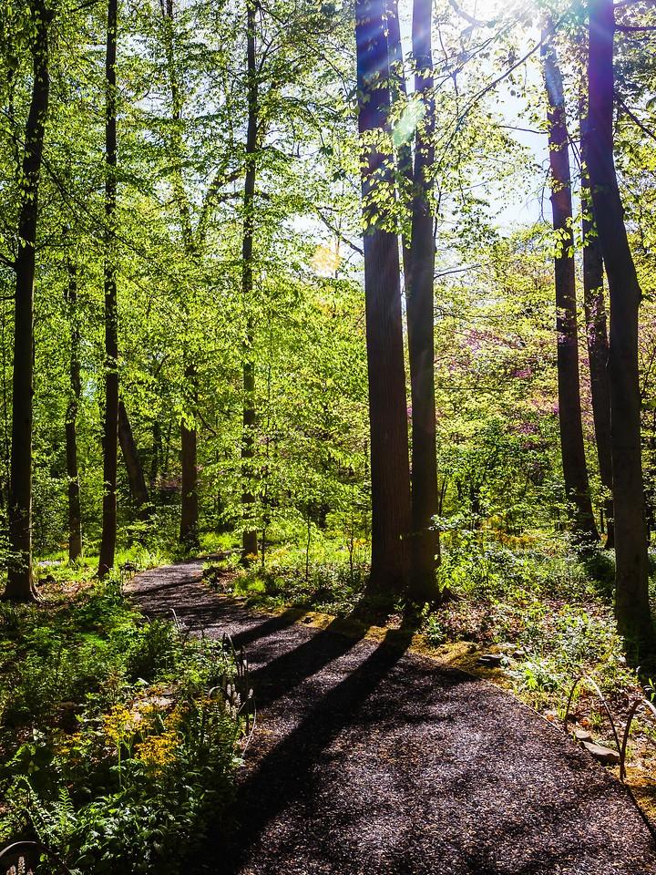 Chanticleer花园,幽静的树林_图1-13