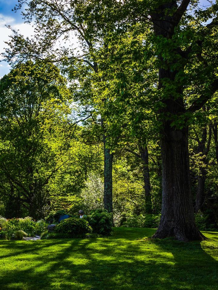 Chanticleer花园,幽静的树林_图1-18
