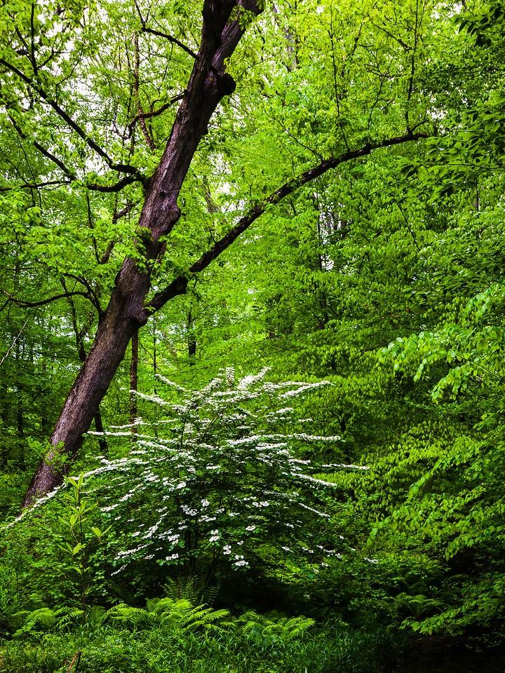 Chanticleer花园,幽静的树林_图1-19