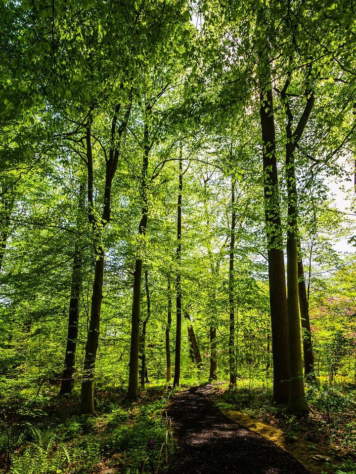 Chanticleer花园,幽静的树林_图1-20