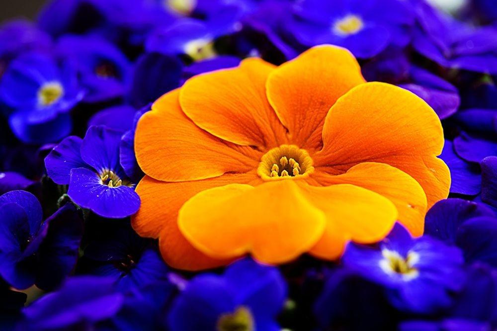 花卉日记--102_图1-1