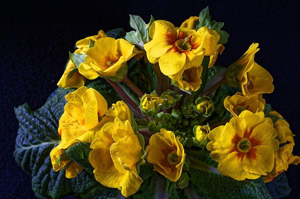 花卉日记--102_图1-2