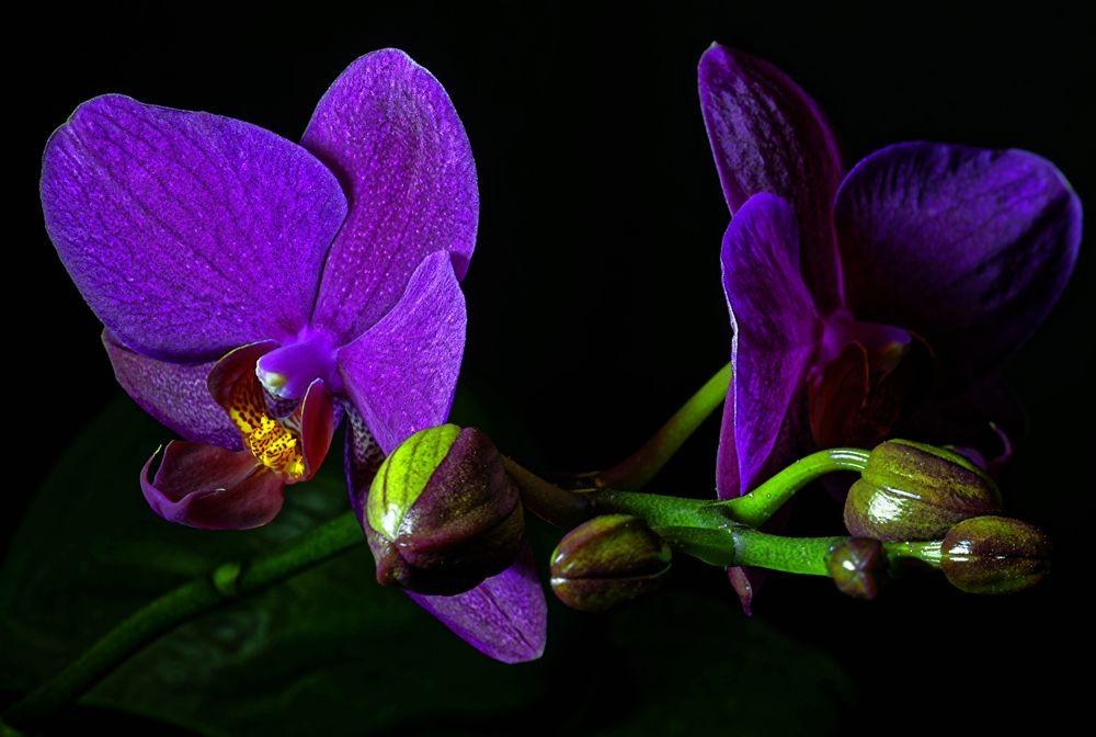 花卉日记--102_图1-3