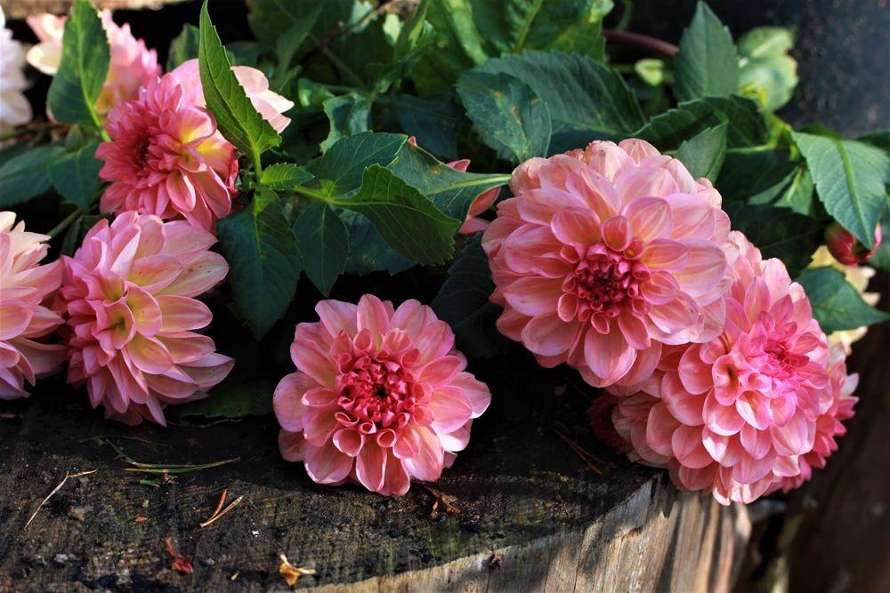 花卉日记--102_图1-5
