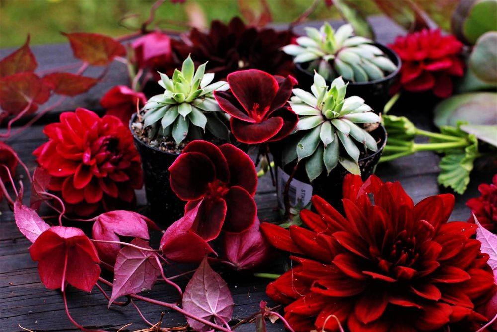 花卉日记--102_图1-6